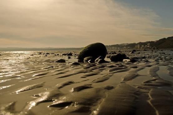 beach background sand