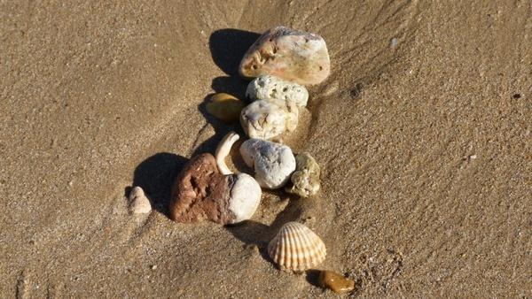 beach beach sand shell