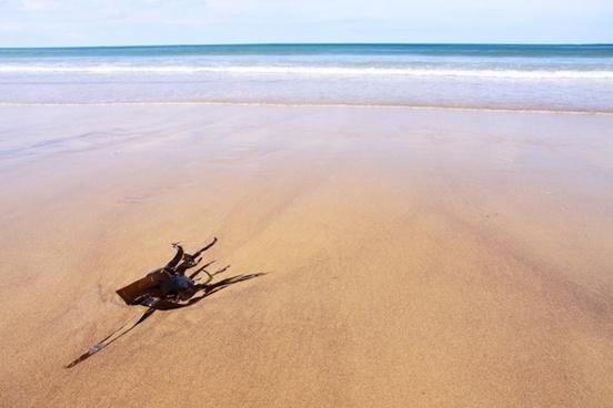 beach blue coast