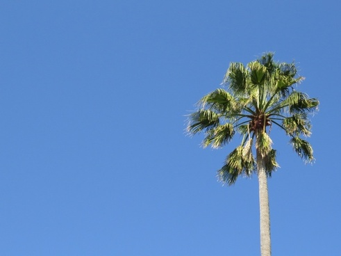 beach blue sky branch leaves nature nobody outdoors