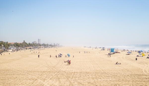 beach camel coast desert dry environment group