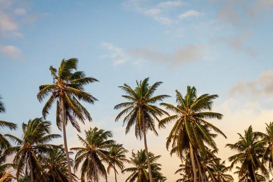 beach coast coastline coconut exotic holiday idyllic