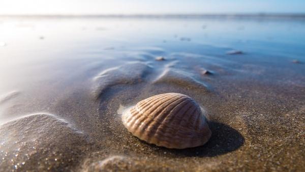 beach coast coastline conch island marine mollusk