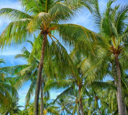 beach coast coconut exotic holiday idyllic island