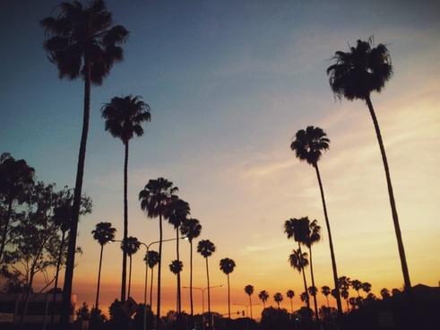 beach dawn dusk evening exotic nature nobody palm