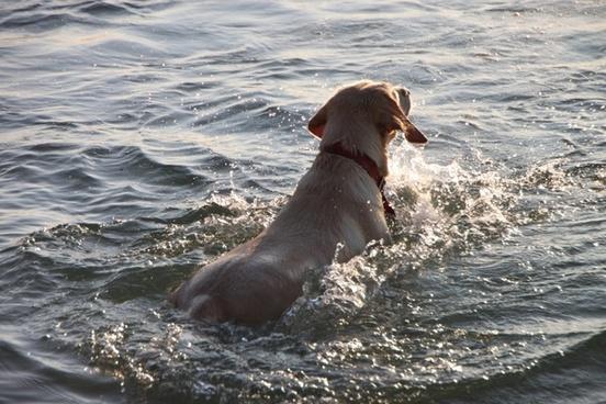 beach dog funny