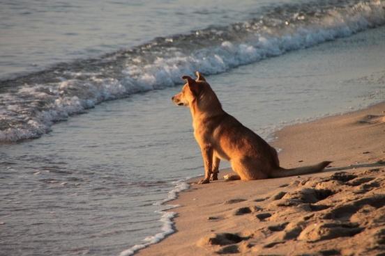 beach dog sunrise
