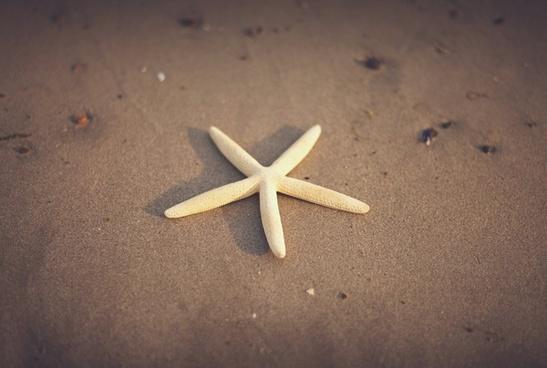 beach echinoderm fine flag free invertebrate