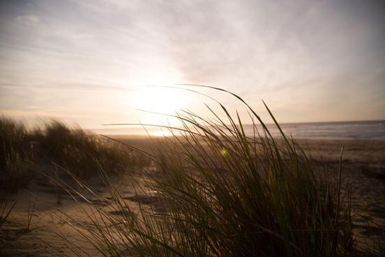 beach field fog golden grass landscape light