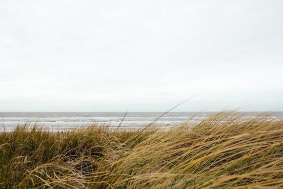 beach grass ocean sea shore water wave wind