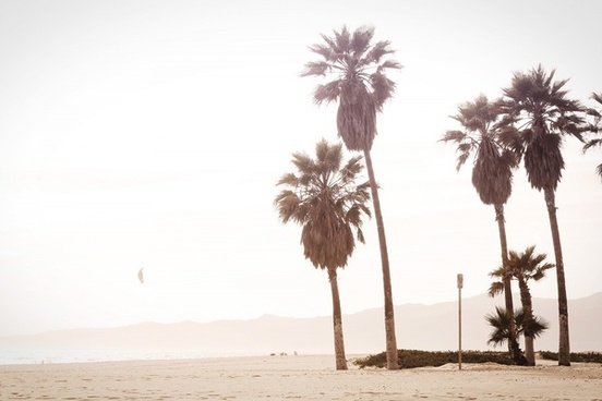 beach haze holiday kite mist palm tree sand shore