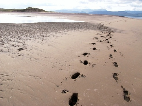 beach nature traces