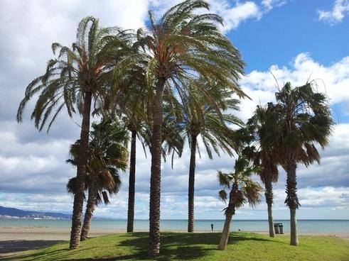 beach sea palms
