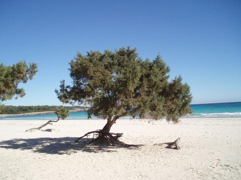 beach sea sand beach