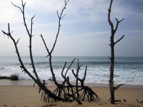 beach tropical sri lanka