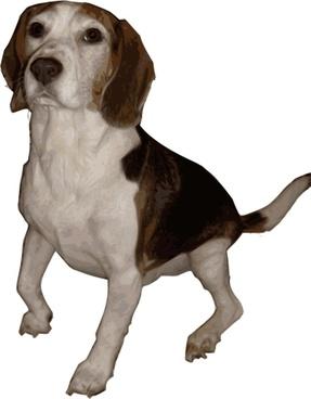 Beagle Medium Version