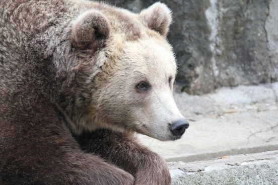 bear bears zoo
