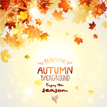 beautiful autumn leaves background creative vector