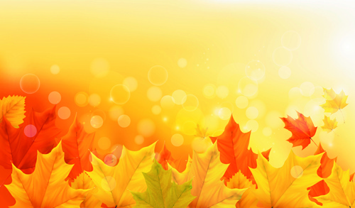 beautiful autumn leaves background vector