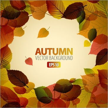 beautiful autumn maple leaf vein background vector
