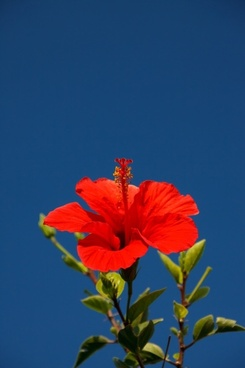 beautiful beauty bloom