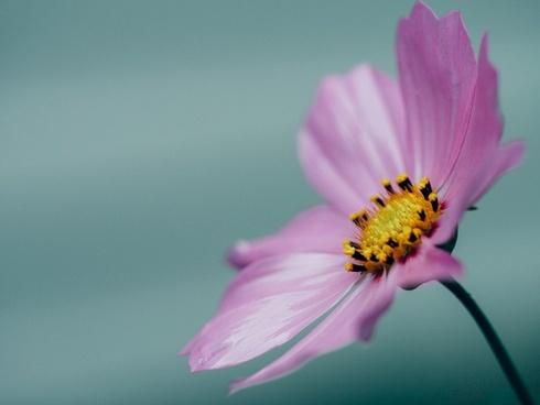 beautiful bee bloom blossom closeup color colour
