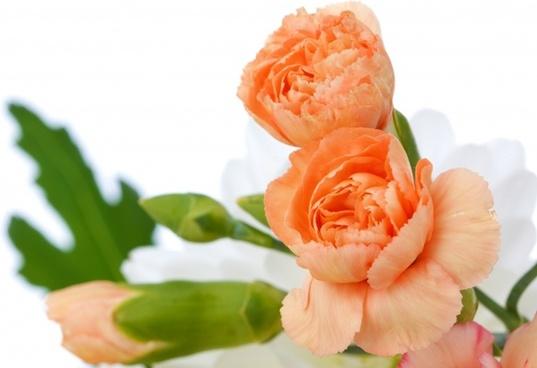 beautiful bloom blossom