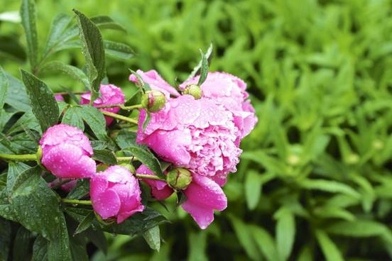 beautiful bloom blossom bright closeup color flora
