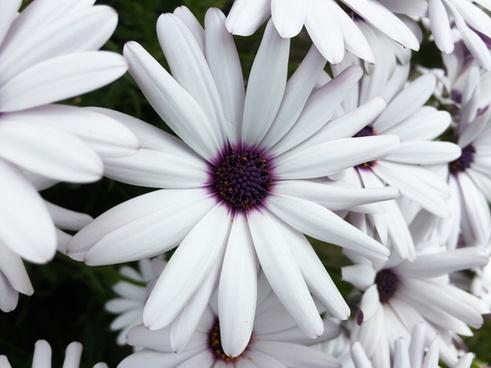 beautiful bloom blossom bulb color colour delicate