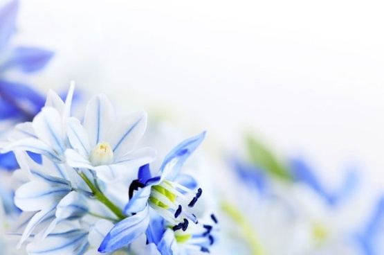 beautiful blue flowers 03 hd picture