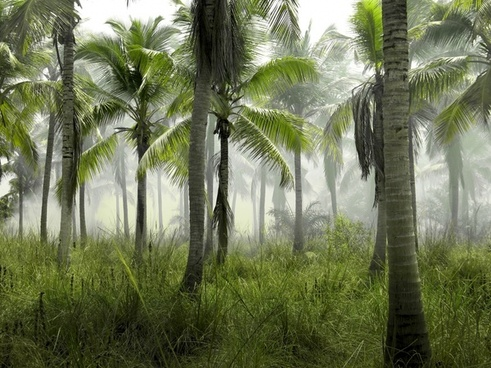 beautiful bright coconut forest growth idyllic