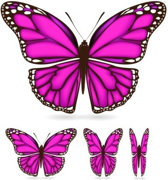 beautiful butterfly 02 vector