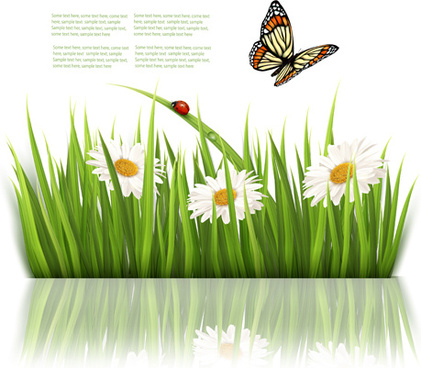 beautiful butterfly and green grass vector background