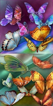 beautiful butterfly psd