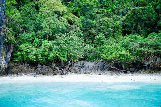 beautiful clear forest holiday jungle landscape