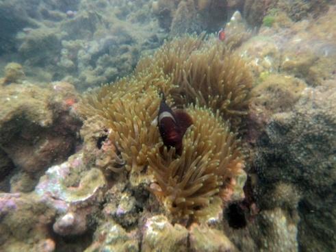 beautiful fish underwater