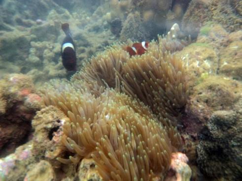 beautiful fish underwater 2