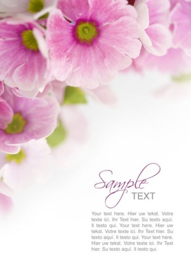 Flower Background Images High Resolution