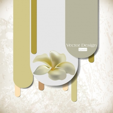 frangipani flower background elegant bright modern design