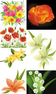 beautiful flowers flowers vector