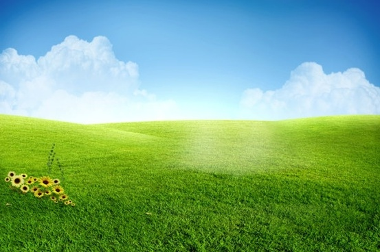 beautiful grass psd