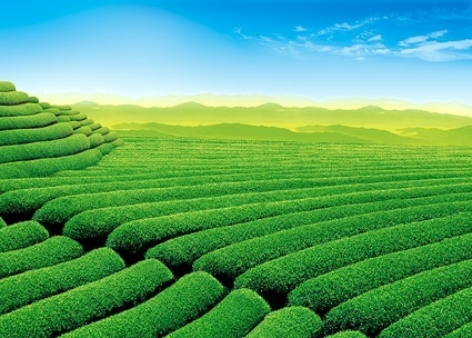 beautiful green fields stock photo