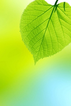 beautiful green leaf background 01 hd picture