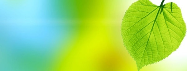 beautiful green leaf background 02 hd pictures