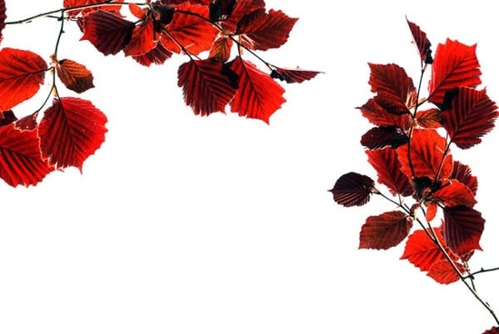 beautiful leaves 10 hd picture