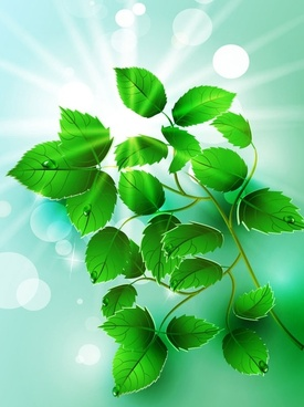 beautiful light green leaves vector