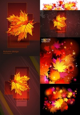 beautiful maple leaf vector