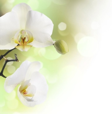 beautiful orchids in highdefinition picture 3