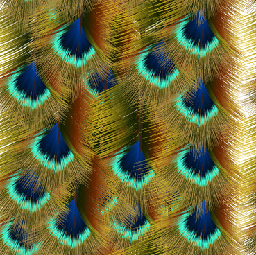 beautiful peacock feathers background graphics
