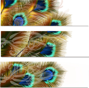 beautiful peacock feathers vector banners